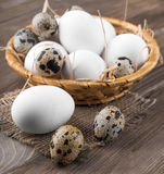 цыпленок eggs триперстки Стоковое фото RF