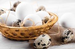 цыпленок eggs триперстки Стоковое Фото