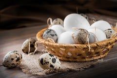 цыпленок eggs триперстки Стоковые Изображения