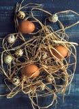 цыпленок eggs триперстки Стоковое Изображение