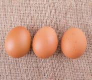 Цыпленок Eggs VIII Стоковые Изображения