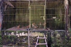 Цыплята в деревянном курятнике Стоковые Изображения