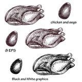 Цыплята 1 Стоковые Фотографии RF