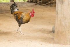 Цыплята стоковая фотография rf