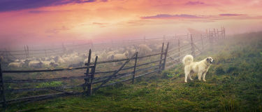 Чабан и овцы Стоковые Изображения RF