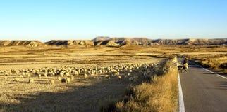 Чабан и стадо овец стоковые изображения rf