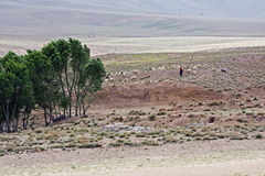 чабан Марокко Стоковые Фото