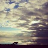 Чабан на пляже Стоковые Фотографии RF