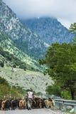 Чабан при козы идя к горе стоковое фото