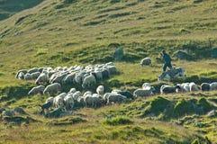 Чабан с его овцами и ослом Стоковые Фото