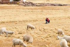 Чабан управляя ее стадом, Перу Стоковые Фотографии RF