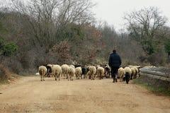чабан sheeps Стоковое Изображение