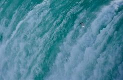 Чайка витая близко к Ниагарскому Водопаду Стоковое Изображение