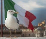 чайка в Венеции в Италии стоковые изображения rf
