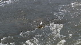 Чайка в воде Североамериканское река Ландшафт видеоматериал