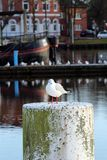 Чайка в гавани Emden Стоковое Изображение