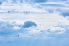 Чайка в небе Стоковые Фотографии RF