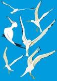 Чайка в небе Стоковое Изображение RF