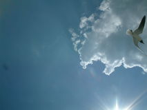 Чайка в солнце Стоковое Фото