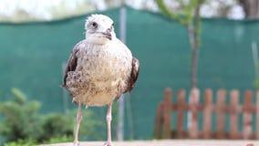 Чайка в траве сток-видео