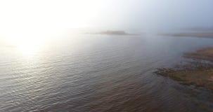 Чайка в тумане Вид с воздуха красивого вечера в движении надводном акции видеоматериалы