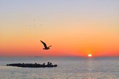 Чайка в утре Стоковые Изображения RF