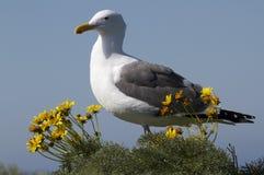 Чайка в цветках стоковое изображение rf