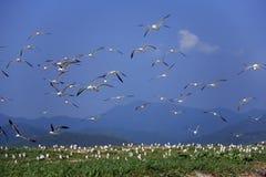 чайка гнездя острова где Стоковое Изображение RF
