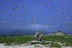 чайка гнездя острова где Стоковые Изображения RF