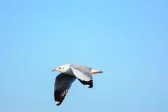 Чайка летает в небо стоковое изображение rf