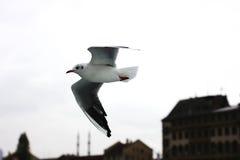Чайка летания в сером небе облака в Стамбуле Стоковая Фотография