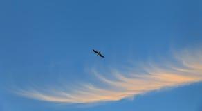 Чайка летания против голубого неба Стоковые Изображения RF
