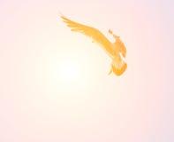 Чайка летания с солнечным светом Стоковые Изображения