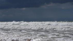 Чайка летая над бурным морем развевает темное облако грома сток-видео