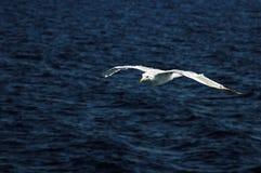 Чайка летая над морем Стоковые Изображения RF