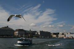 Чайка, летая Стоковые Изображения RF