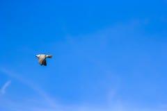 Чайка и космос Стоковое Изображение RF