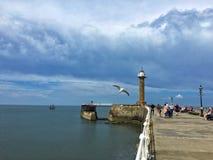 Чайка и маяк моря стоковая фотография rf