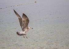 Чайка и море стоковые изображения rf