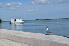 Чайка и плавучий дом Стоковая Фотография RF