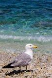 Чайка и пляж Стоковое Фото