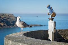 Чайка и телескоп, предпосылка моря, Святой Malo, Бретань Франция Стоковое фото RF