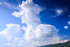 Чайка крупного плана в голубом небе против белого облака кумулюса Стоковое Изображение