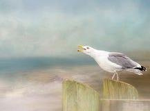 Чайка кукарекая над предпосылкой океана Художественное произведение текстурированное цифров Стоковое Изображение