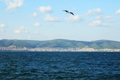 Чайка летает над морем Стоковые Фото