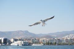 Чайка летания над морем на солнечный день Стоковая Фотография RF