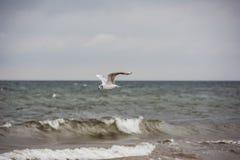Чайка летания над морем Стоковое Изображение RF