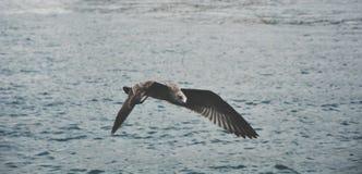 Чайка летания над морем Стоковое фото RF