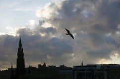 Чайка летая над горизонтом Эдинбурга на сумраке стоковые фотографии rf