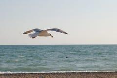 Чайка летая над морем против голубого неба стоковые фото